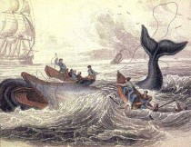 Scene from an illustrated version of Moby Dick