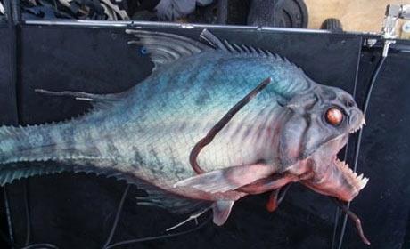 The killer fish from Piranha 3D