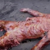 Watch Rotters In The Flesh featurette from The Walking Dead Fifth Season home video release