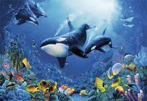 Delight of Undersea Life 36 x 24 Art Poster