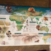 National Geographic Dawn of Humans 31 x 20 inch Foldout Poster (February 1997) [C38]