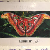 Flying Flowers 24×20 inch SanDisk Promotional Poster Signed by Photographer Rick Sammon [J06]